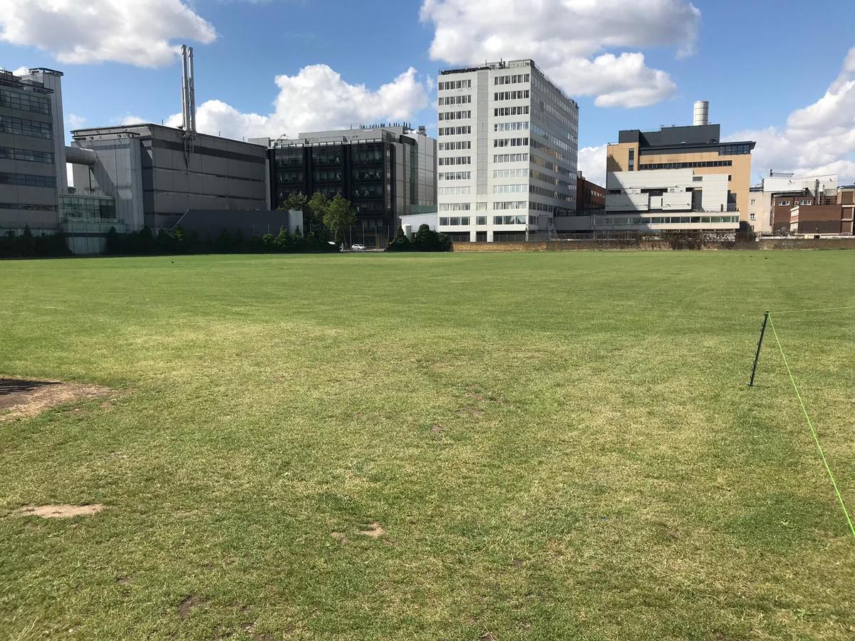 Grass Area - SLS @ Ark Burlington Danes Academy - Hammersmith and Fulham - 1 - SchoolHire